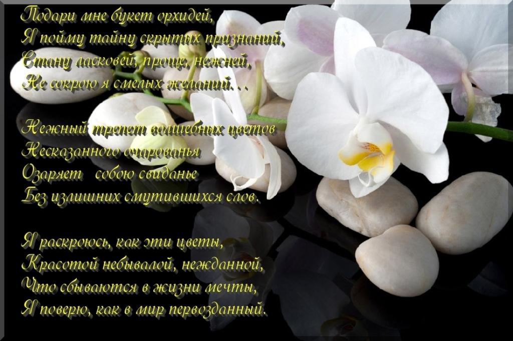 начала хочу поздравления с днем рождения про орхидею мебель самым низким