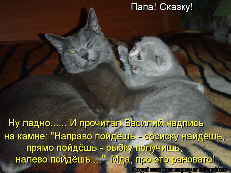Самые смешные картинки с надписями до слез про кошек