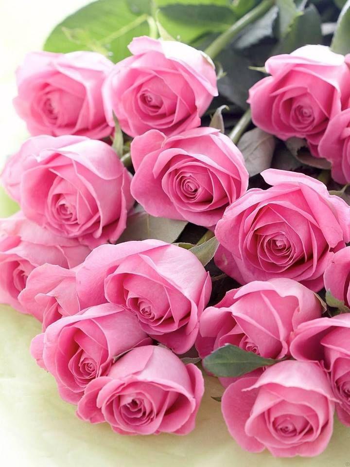 Роскошные розы открытки