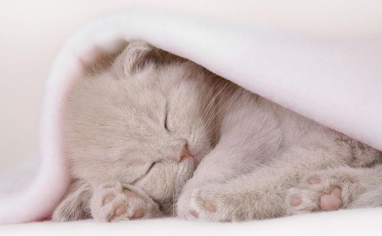 Картинка спи сладко котенок