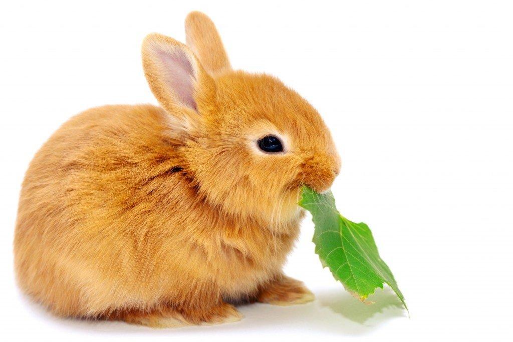 Картинка крольчата для детей
