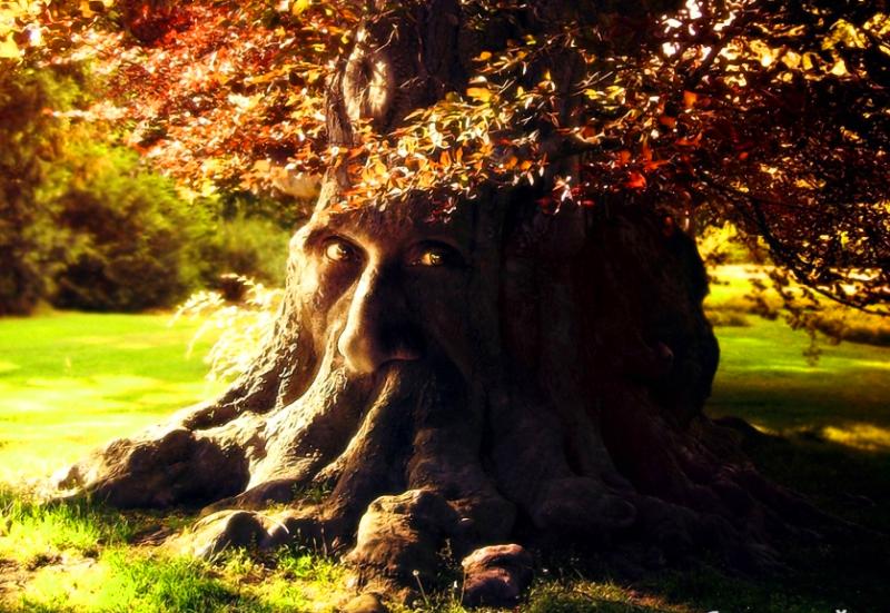 касается сказочные деревья фото касается