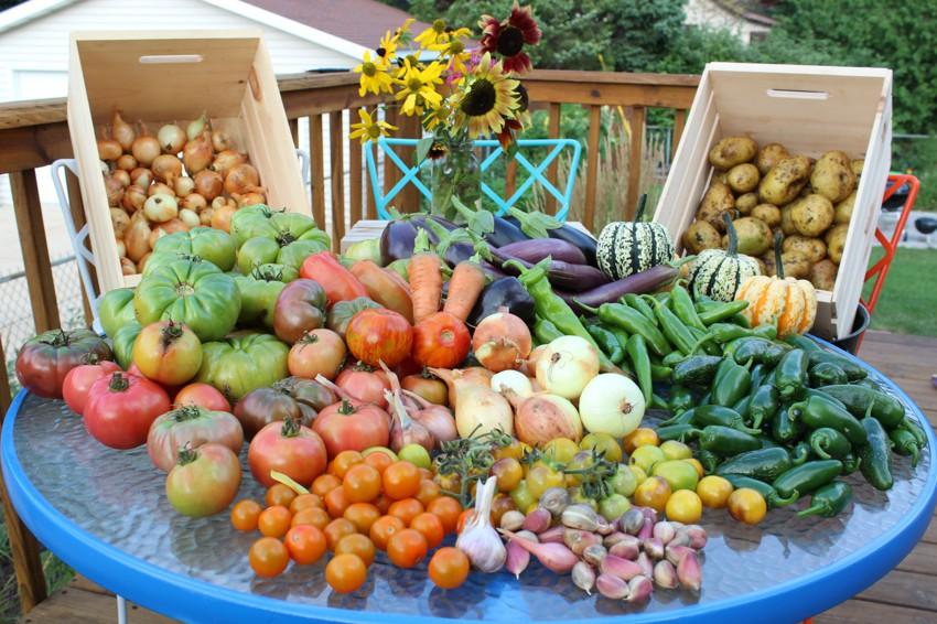 Картинки по запросу хороший урожай