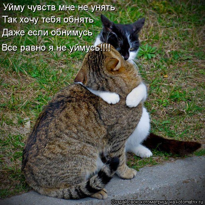Я так хочу поцеловать тебя картинки