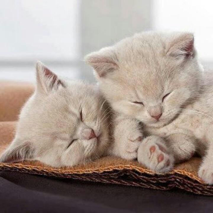 Лет, спокойной ночи картинки котики