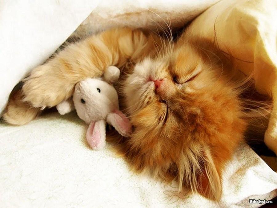 открытка с добрым утром любимая и котиком поднос стиле лофт