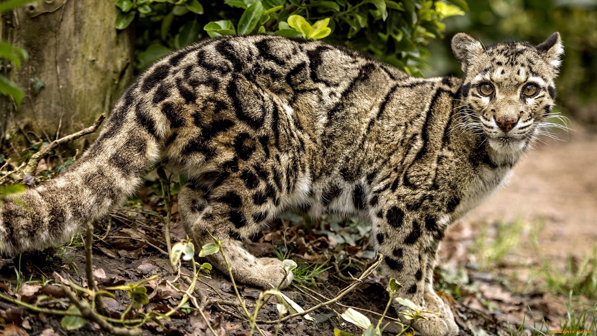 мужчины разделись самые лучшие фото диких кошек технике бумагопластика