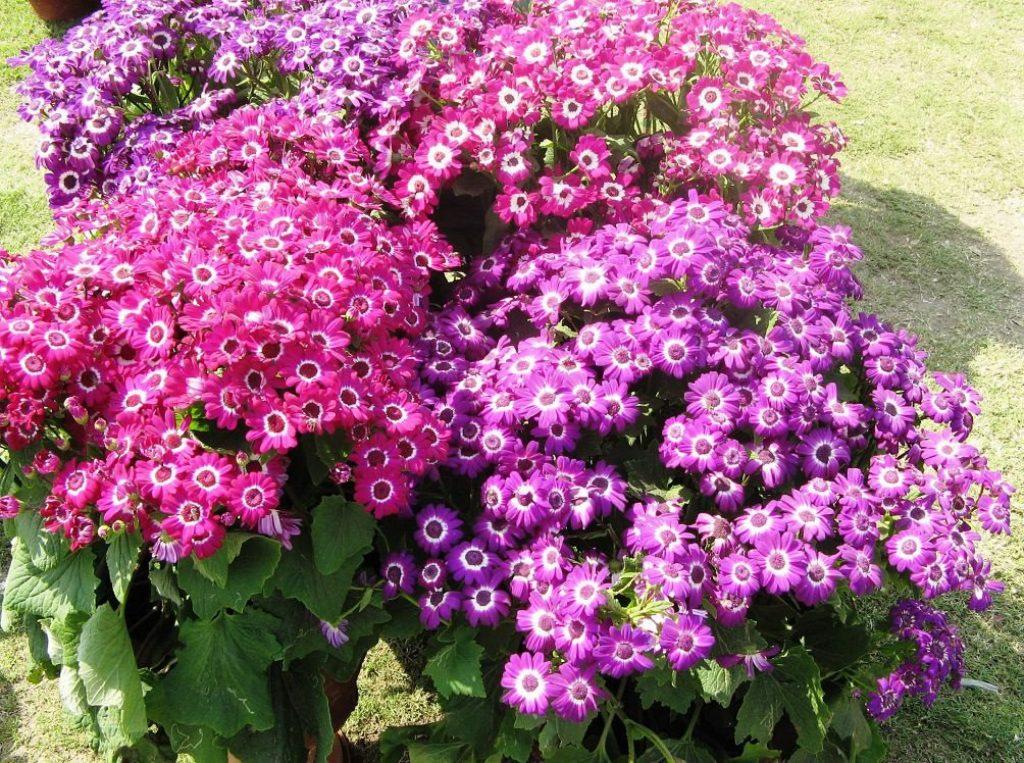 свои картинки многолетних уличных цветов временем местные