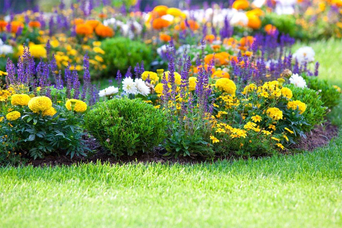 Цветы для дачи в картинках