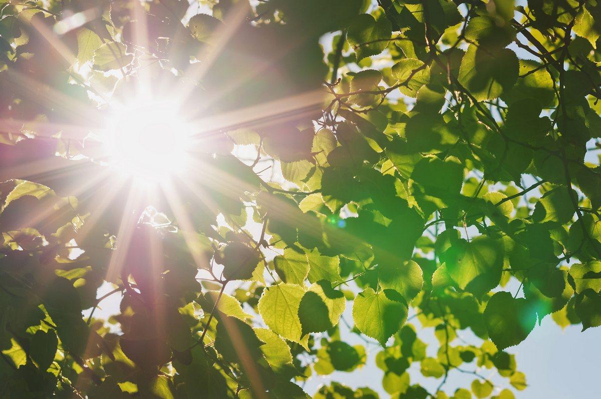 Солнышко и тепло картинки