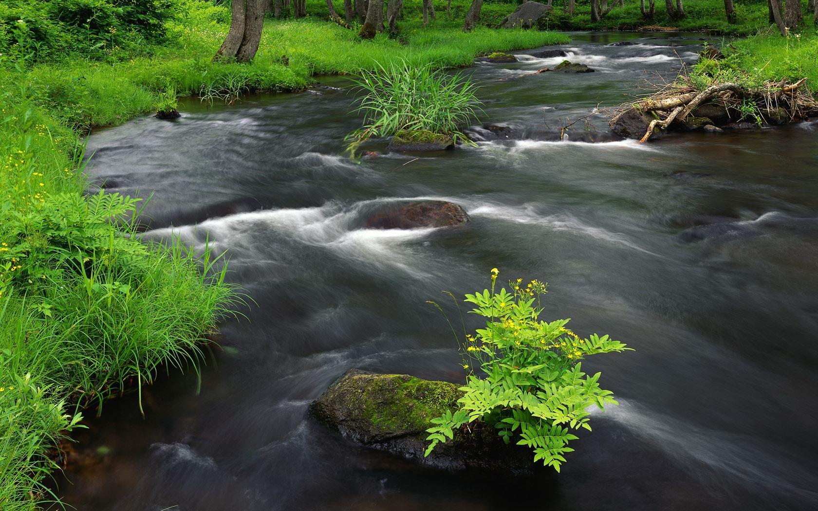 гифки живые картинки живописный ручей ощущение что