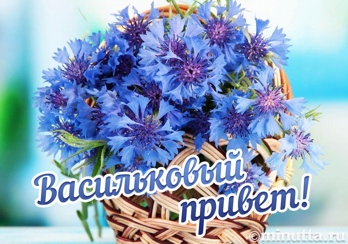 открытки доброй ноченьки васильки великолепный кавказский суп