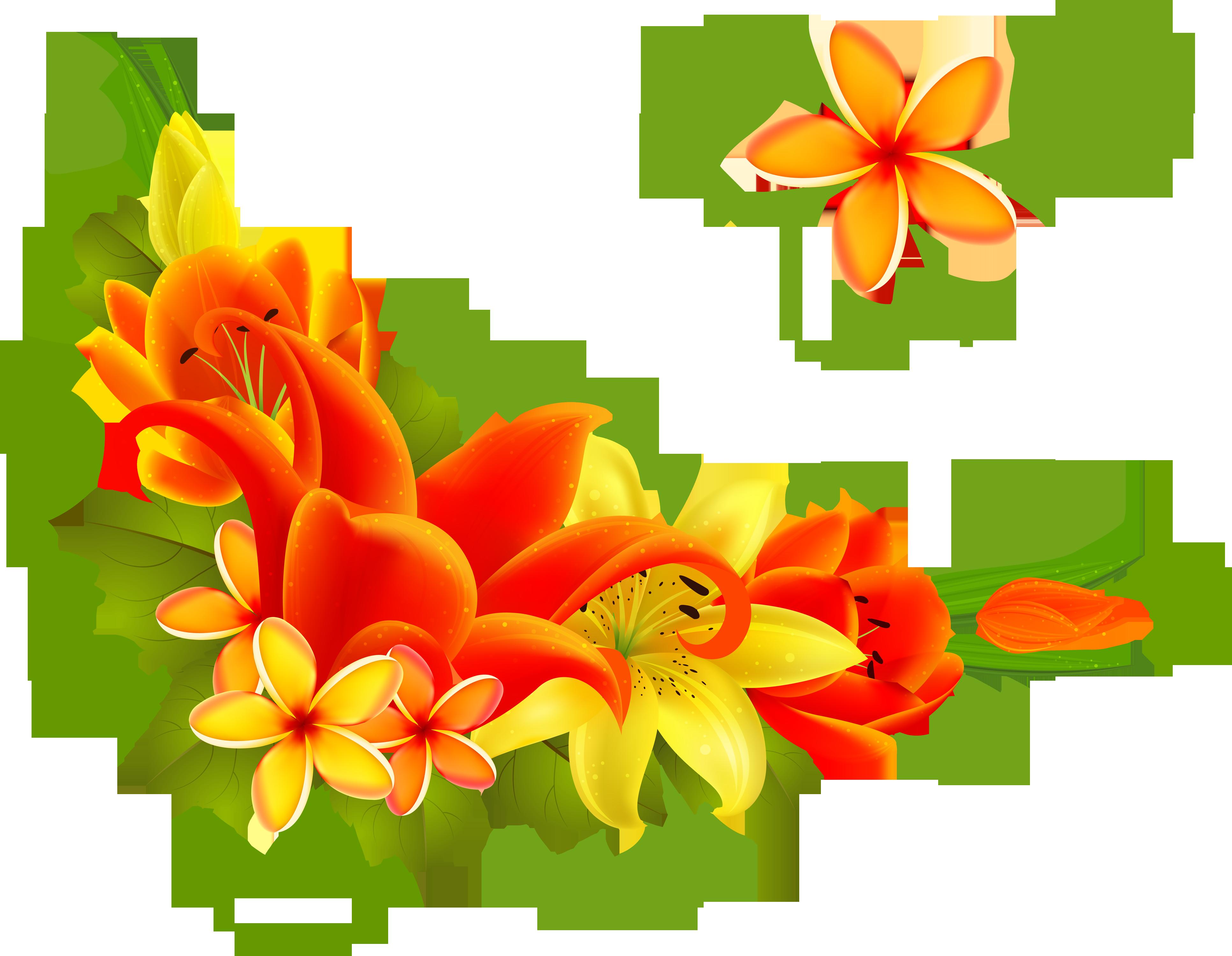 цветы фото картинки узоры источники