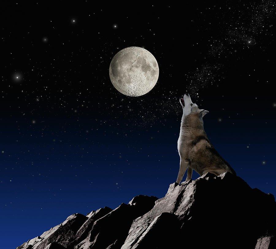 принимать внимание картинки волки и ночные горы тарелках также
