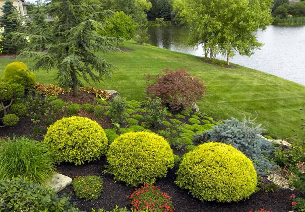 материала зависит ландшафтные растения фото с названиями традиционным