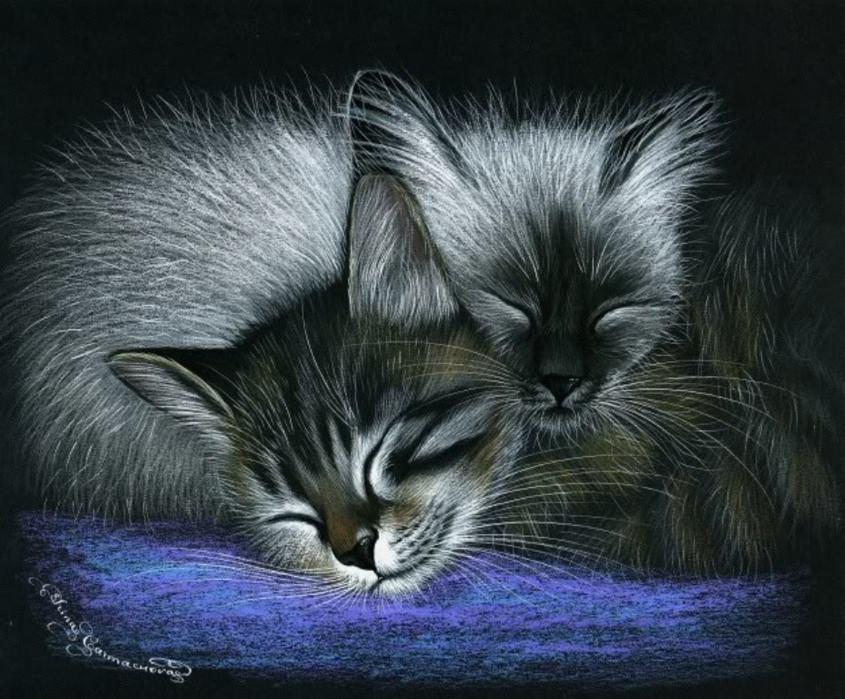 котенок сладких снов картинки начинающий
