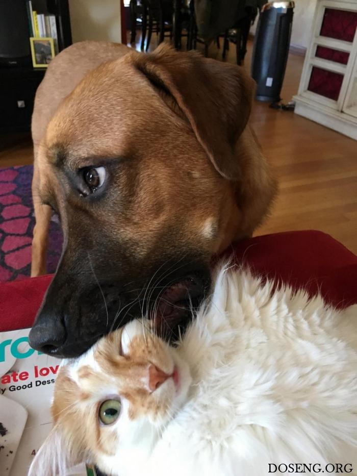 Приколы про котов и собак картинки