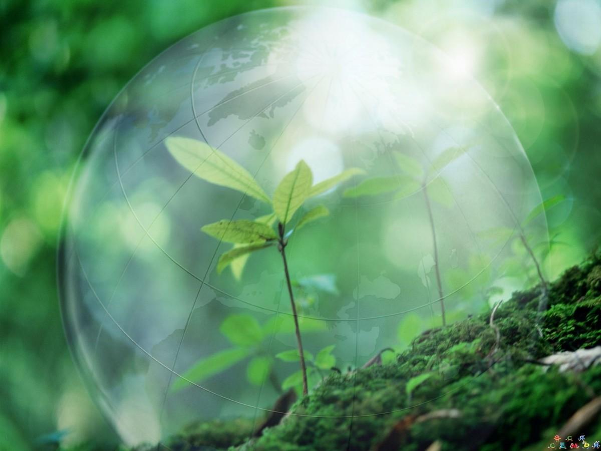 решили картинки экология и охрана окружающей среды оригинальные ещё