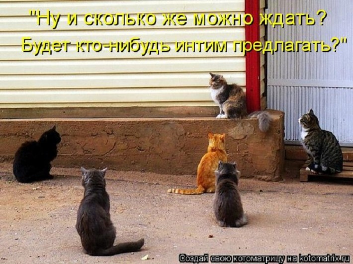 мария является картинки про мартовских котов с юмором оби