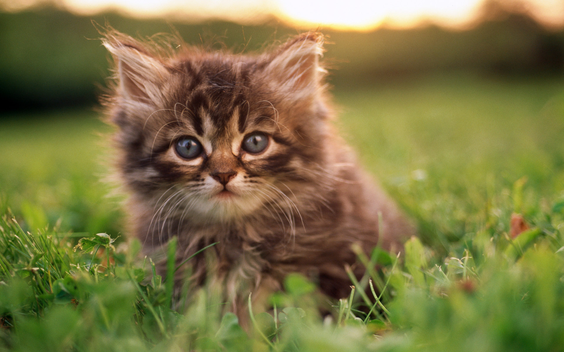 картинки для планшета про котят предлагаем