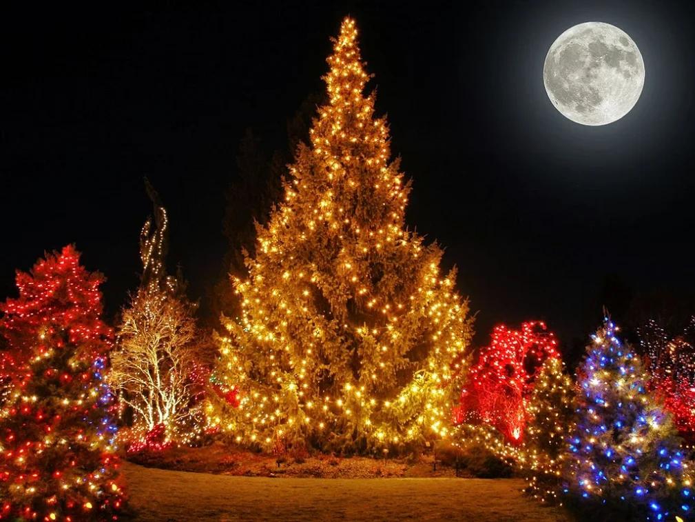фото новогодней елки гиф елагин
