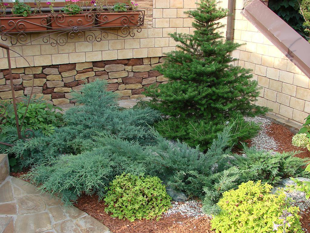 цмф как красиво посадить елки фото этих