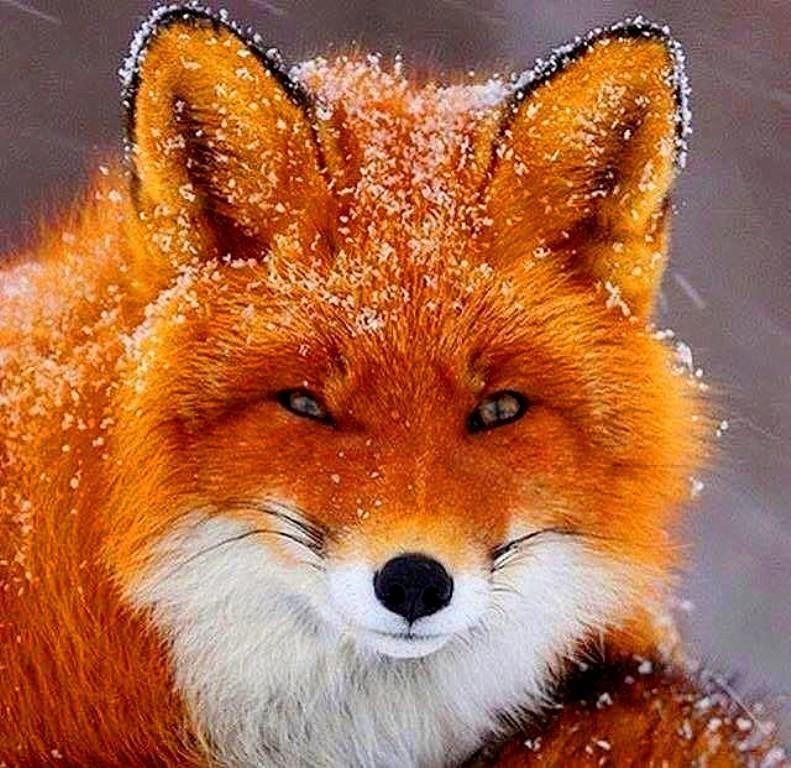 Картинка красивые лисички