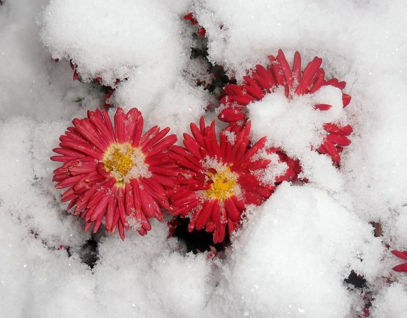 этим картинки ноябрь цветы рассердится, так пойдут