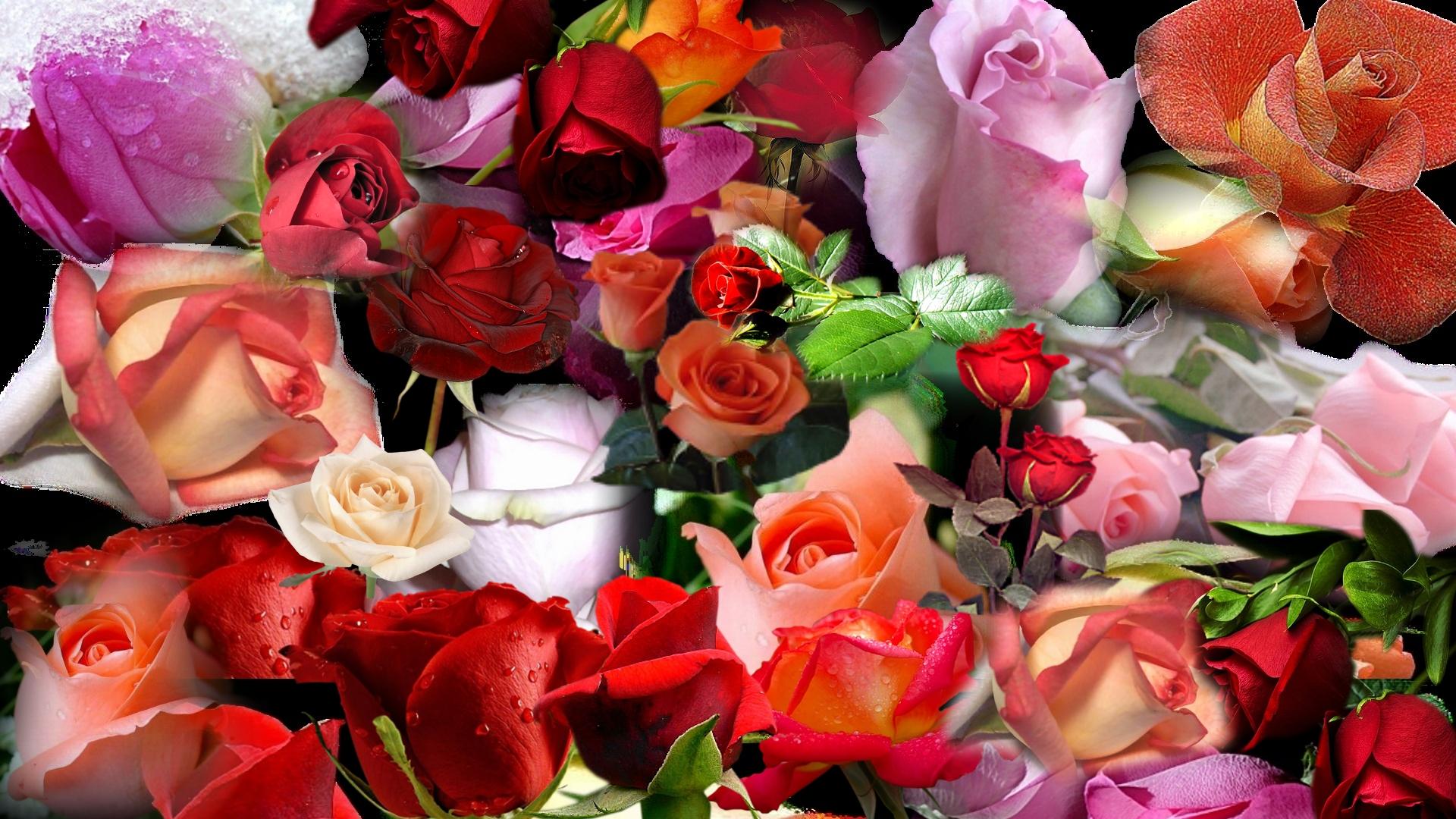 показал поклонникам плейкаст самые красивые цветы большие открытки картину такие