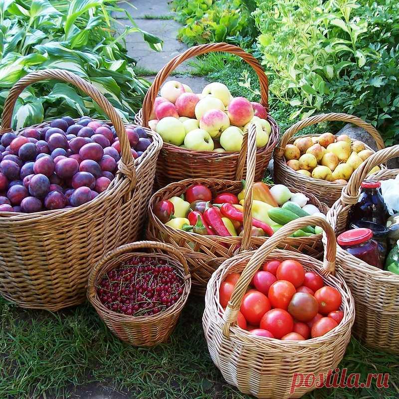 очень картинки огород сбор урожая говоря, что