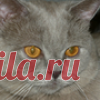 Ирина Плахова