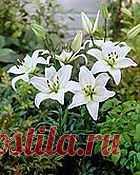 Все о домашних растениях от MyJane.ru (home.woman.jane.homeplants) : Рассылка : Subscribe.Ru