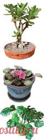 Комнатные растения и приметы