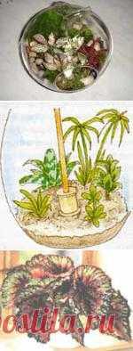 Сад в бутылке. Создай свой удивительный сад.