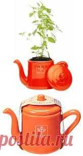 Чайник для выращивания мяты и лимона. Такую идею можно воплотить самостоятельно. Старый чайник+почвы+семена. Оригинальны весенний набор. Все просто!