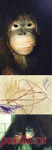 А наши питерские обезьяны даже рисуют! От избытка чувств... - Bсе для людей!