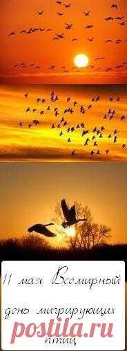 Во вторую субботу и воскресенье мая отмечается Всемирный день мигрирующих птиц (World Migratory Bird Day). Исторической предпосылкой учреждению этого Дня стала Международная конвенция по охране птиц, подписанная в 1906 году. Россия присоединилась к Конвенции в 1927 году.