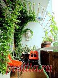 Балкон или лоджия обязательно должны стать любимым местом для отдыха. Такая зелень ежедневно необходима нам, жителям мегаполисов и владельцам квартир. Чувство творца переполняют, когда вы выходите на такой балкон!