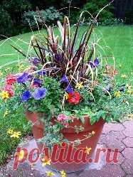 Como hacerse el guerrillero-jardinero