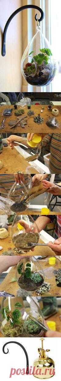Оригинальный и простой в изготовлении флористический подвесной террариум.