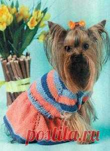 Платье в полоску для собачки, связанное на спицах | Схемы, описания вязаных изделий и другие виды рукоделия