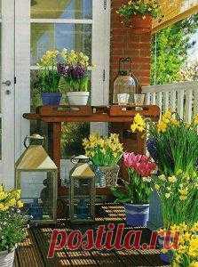 Весна на балконе. Яркий цветник из первоцветов.
