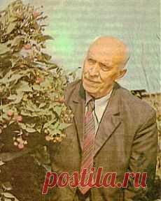 Вкусный Огород: Малина по методу Соболева. Опыт садоводов.