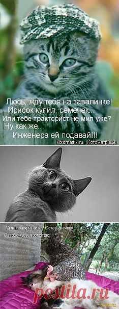 фото приколы животных: 4 млн изображений найдено в Яндекс.Картинках