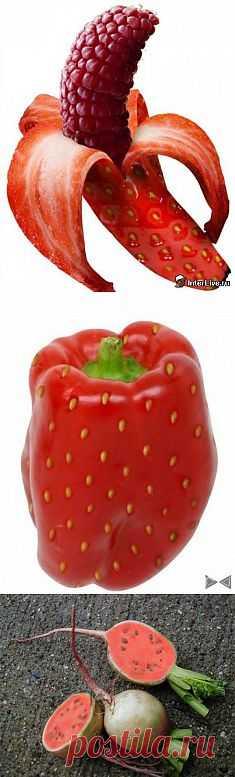 Куда ведут нас гибриды. Наверноe, ни для кого уже не секрет, что семена овощей, которые мы покупаем в магазине – это мутированные гибриды, которым учёные в лабораториях придают желательные для техногенной сферы свойства.