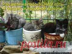 Расцвели | KotoMail.ru