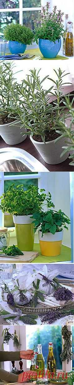 How to grow up spicy herbs on a window sill?   GreenHome