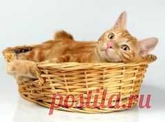 Сегодня 22 февраля памятная дата День кошки в Японии