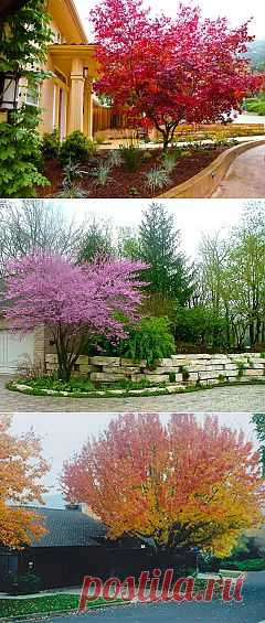 яркие деревья в дизайне ландшафта
