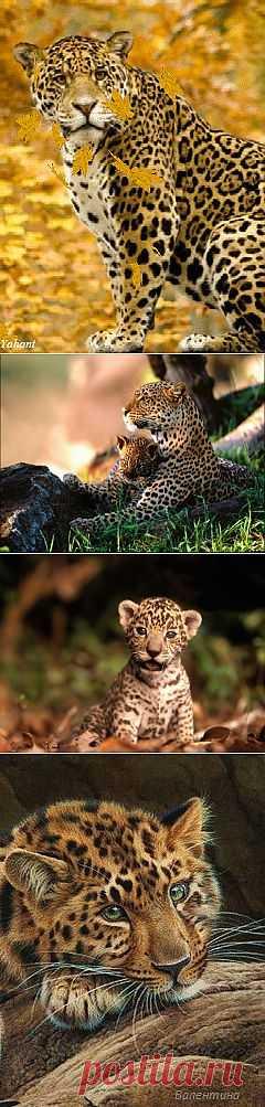 В мире животных | НАУКА И ЖИЗНЬ